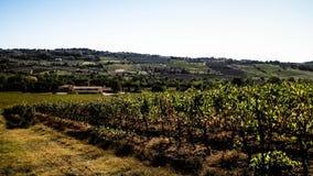 Paysage des vignobles toscans, r?gion de chianti, Italie images libres de droits