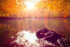 Paysage doux d'automne de vue, parc automnal, nature de chute photos libres de droits