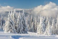 Paysage du bel hiver neigeux Photos stock