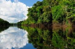 Paysage du fleuve Amazone au Brésil image stock