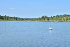 Paysage du lac avec le cygne images stock