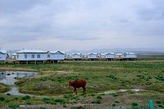 Paysage du Lac Qinghai le long de la route Photos stock