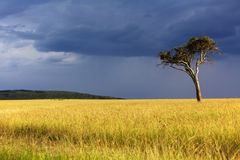 Paysage du masai Mara Image stock