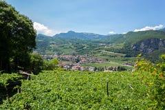 Paysage du nord italien avec des vignobles Image libre de droits