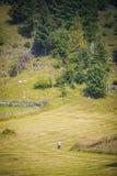 Paysage du pays dans la région de la Transylvanie Photos libres de droits