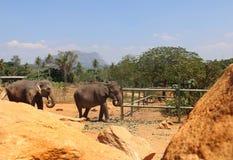 Paysage du soleil du Sri Lanka de nature de vacances d'éléphant photo libre de droits