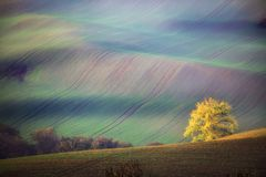 Paysage du sud de Moravian avec des arbres et des champs verts onduleux en automne Champs onduleux dans la République Tchèque Tch photographie stock libre de droits