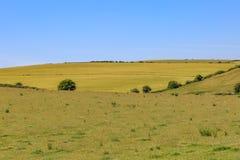 Paysage du Sussex image libre de droits