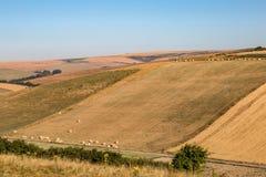 Paysage du Sussex d'été images libres de droits
