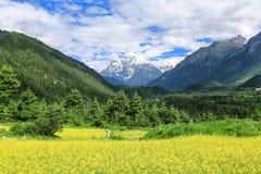 Paysage du Thibet photo libre de droits