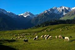 Paysage du Xinjiang Image libre de droits