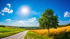 Paysage en été avec le soleil lumineux photo stock