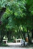 Paysage en bambou Photo libre de droits