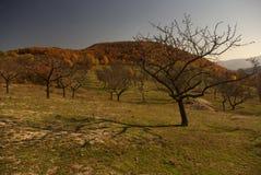 Paysage en montagne de Stara Planina Images libres de droits