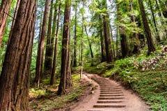 Paysage en Muir Woods National Monument images stock