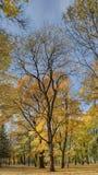 Paysage en parc Image stock