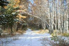 Paysage en retard d'automne - première neige dans la forêt mélangée photographie stock libre de droits