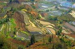 paysage en terrasse de champ Photos libres de droits