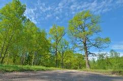 Paysage ensoleillé dans la forêt Photos libres de droits