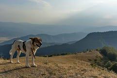Paysage et chien de berger de montagne au balkan central, passage Beklemeto, Stara Planiana photos libres de droits