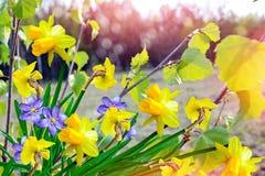 Paysage et fleurs de ressort Image libre de droits