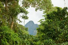 Paysage exotique de forêt tropicale image libre de droits