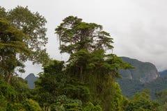 Paysage exotique de forêt tropicale image stock
