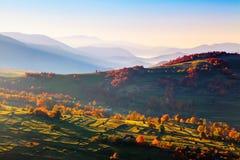 Paysage extraordinaire d'automne Champs verts avec des meules de foin Arbres couverts de feuilles oranges et de cramoisi Paysages images stock