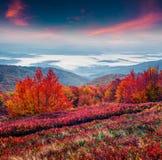 Paysage fantastique d'automne de couleurs dans les montagnes carpathiennes Images libres de droits