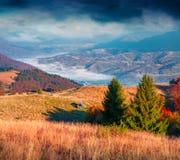 Paysage fantastique d'automne de couleurs dans les montagnes carpathiennes Image stock