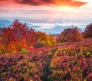 Paysage fantastique d'automne de couleurs dans les montagnes carpathiennes Photo stock