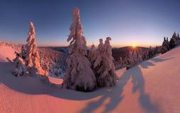 Paysage fantastique d'hiver de soir?e et de matin Ciel obscurci color? Arbre couvert par neige magique du monde de beaut? Premi?r images stock