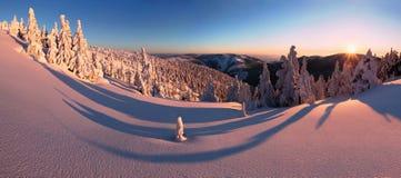 Paysage fantastique d'hiver de soir?e et de matin Ciel obscurci color? Arbre couvert par neige magique du monde de beaut? Premi?r photographie stock