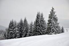 Paysage féerique d'hiver avec des sapins Image stock
