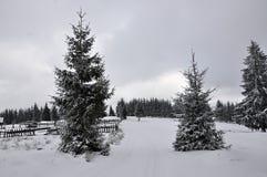 Paysage féerique d'hiver avec des sapins Photo stock