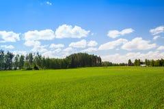 Paysage finlandais d'été rural, champ vert photos stock