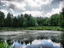 Paysage foncé de forêt image stock