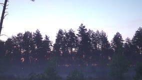 Paysage foncé de nature brumeuse fantasmagorique effrayante de matin - paysage brumeux clips vidéos