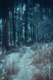 Paysage froid de forêt Photographie stock