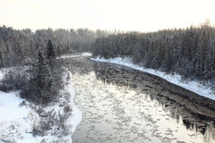 Paysage froid russe de forêt d'hiver Photos libres de droits