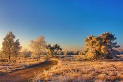 Paysage gelé dans la lumière de matin photos libres de droits