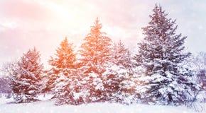 Paysage givré d'hiver dans les branches neigeuses de pin de forêt couvertes de neige par temps froid d'hiver photos libres de droits
