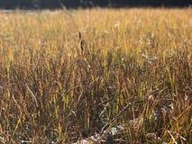 Paysage herbeux pendant l'automne photos libres de droits