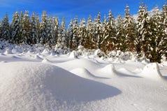 Paysage hivernal avec la clairière et la forêt neigeuses Image stock