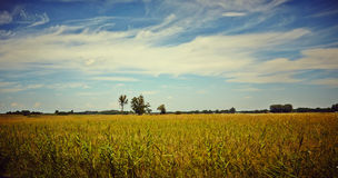 Paysage idyllique de terres cultivables Photos stock