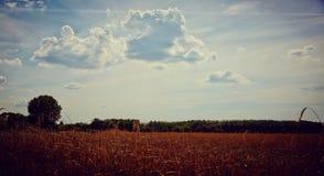 Paysage idyllique de terres cultivables Photo libre de droits