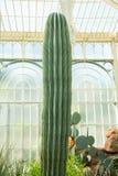 Paysage imposant très beau de cactus en serre chaude Photographie stock libre de droits