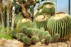 Paysage imposant très beau de cactus en serre chaude Images stock