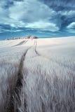 Paysage infrarouge d'été de couleur fausse surréaliste renversante au-dessus d'agri Photographie stock libre de droits