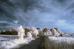 Paysage infrarouge unique beautioful renversant avec la couleur fausse Photographie stock libre de droits